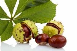 Ingrediente castaño de Indias Varilux premium