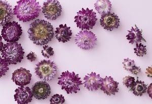 Alergias Away NO Allergy Funciona basado en Helichrysum