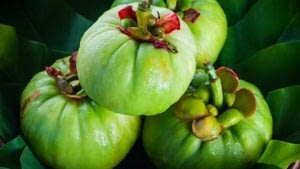 planta de garcinia cambogia