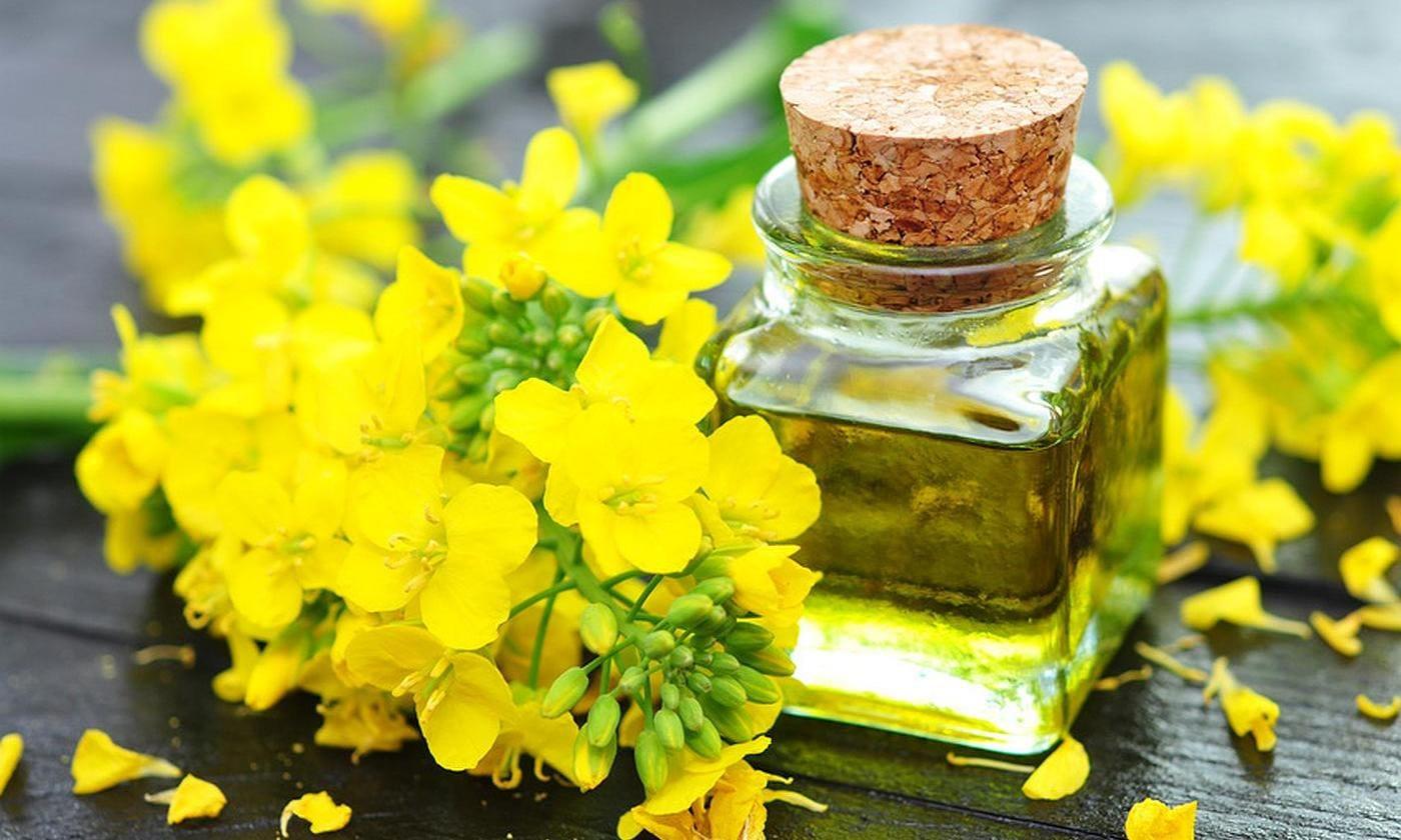 Beneficios del aceite de canola