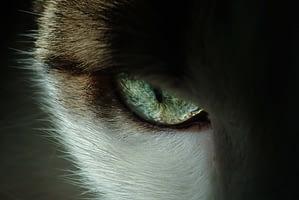 Lápiz de ojos de gato